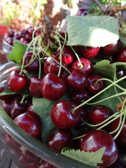 Cherries are back this summer!